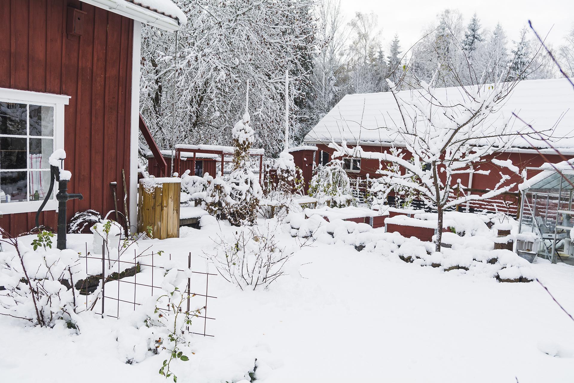 emmas trädgård täckt av snö