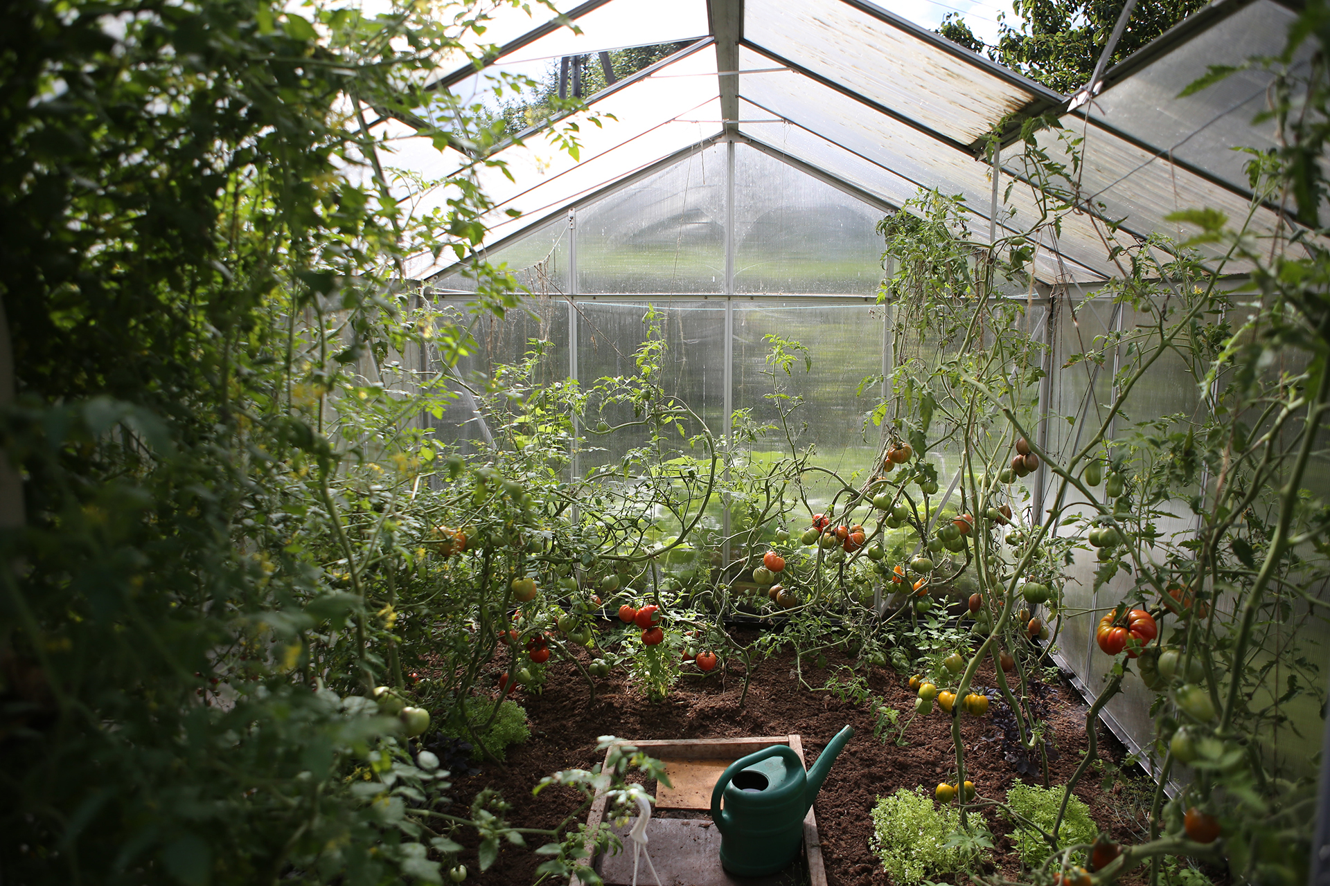 odla i växthuset